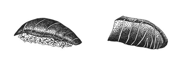 ilustración: Antonio Carrau